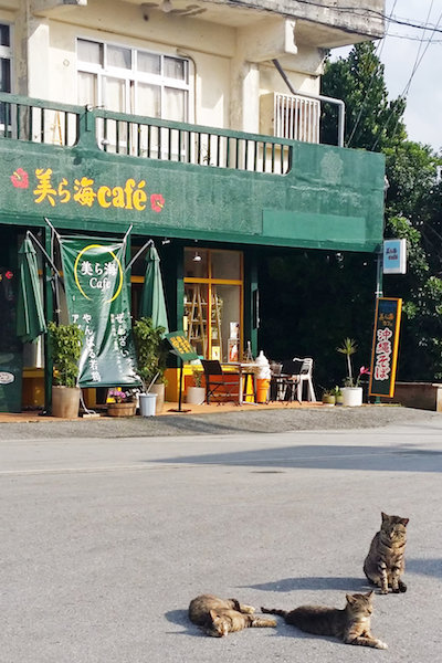 Must-Visit Places In Japan For Cat Lovers