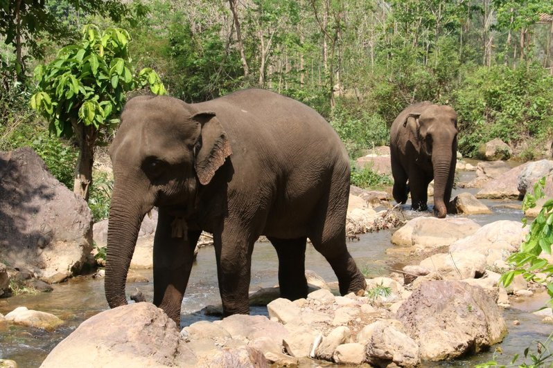 Ethical Animal Experiences In Asia - Elephant experience in Myanmar