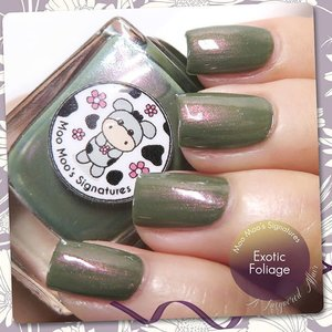 @MooMooSignatures Exotic Foliage from Moo Moo's Story Part III Moorassic collection. A murky #olive #crelly with stunning violet #shimmer. More details up on the revamped alacqueredaffair.com  #nails #nailpolish #sgig #igsg #sgignails #sgnails #instanails #instasg #moomoosignatures #indiepolish #iger #clozette #indieswatch #indienailpolish #nailswatches #bellashoot #bbloggers